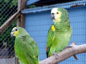 Heeft het kopen van een luchtreiniger zin als u vogels houdt?
